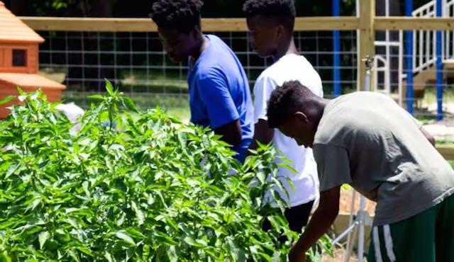 Teens Gardening-Youtube