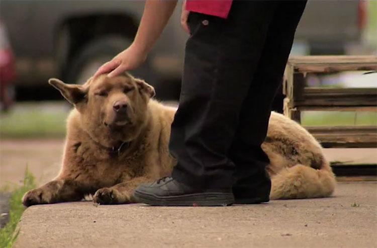 bruno-the-dog-youtube