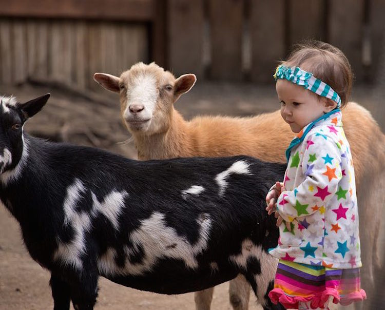 child-with-goats-cc-douglas-brown