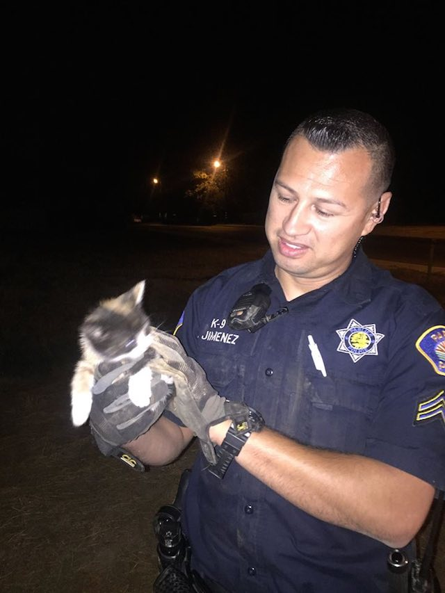 cop-with-kitten-parlier-police-facebook