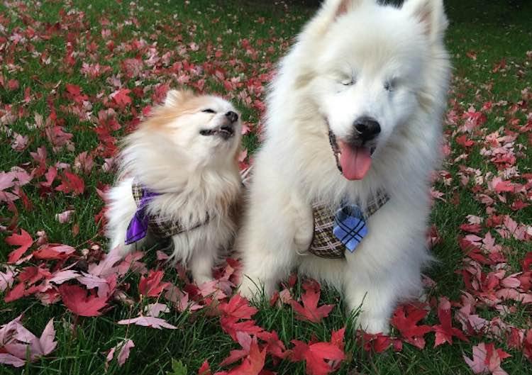 hoshi-and-zen-leaves-instagram