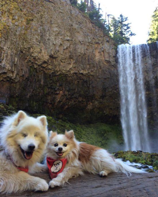 hoshi-and-zen-waterfall-instagram