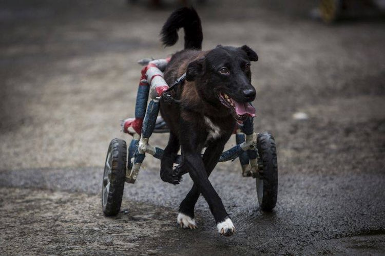 1-wheelchair-dog-facebook