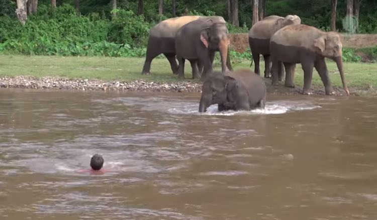 baby-elephant-and-derrick-youtube