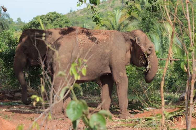 elephants-global-elephant-sanctuary-submitted
