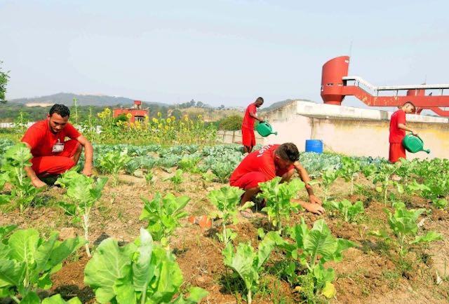 inmates-gardening-omar-friere