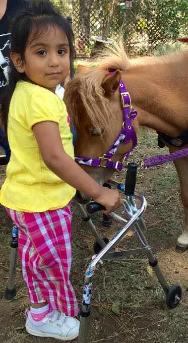 little-girl-with-little-horse-mini-therapy-horses-released