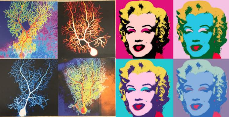 neurons-and-marilyn-dana-simmons