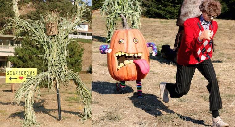 scarecrow-chases-cambria-scarecrows-fb