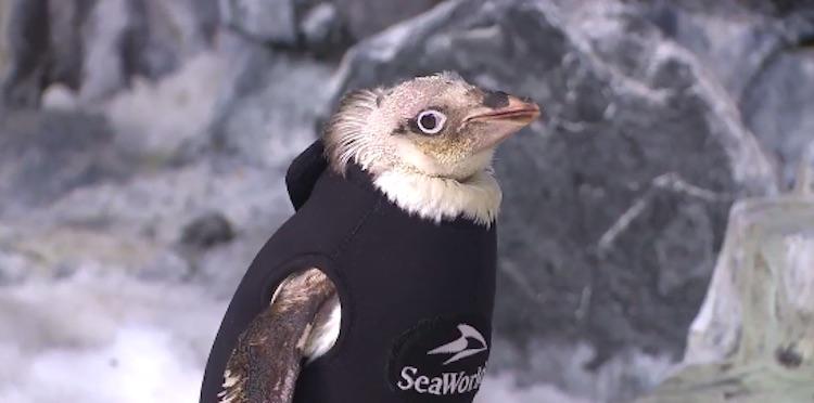 seaworld-penguin-twitter