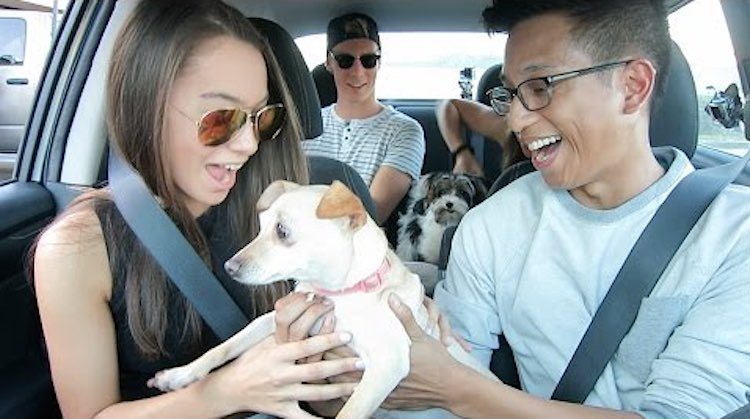 uber-driver-puppies-youtube
