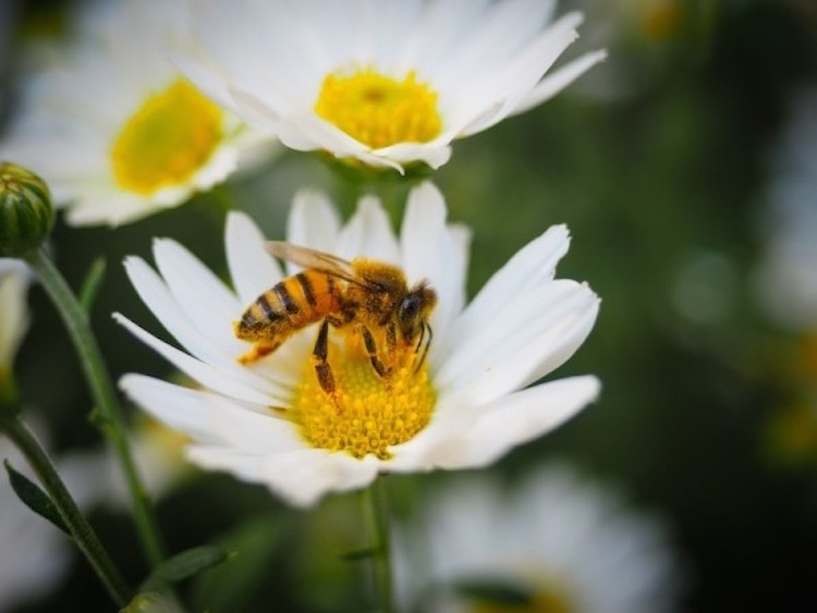 bee-public-domain