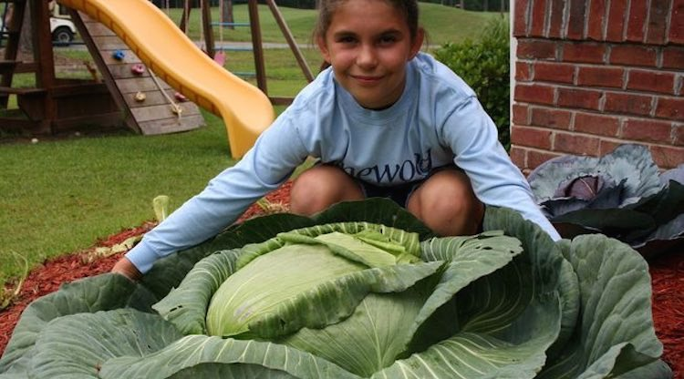 big-cabbage-stacy-stagliano-featured