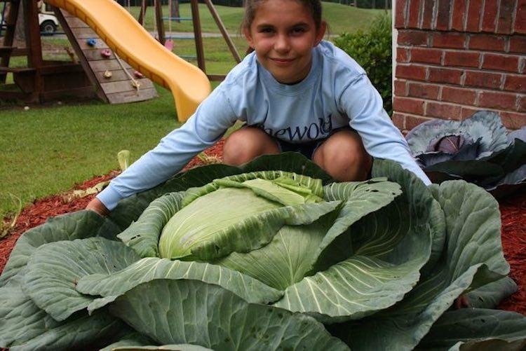 big-cabbage-stacy-stagliano
