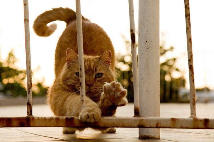 cat-scratching-cc-tom-wachtel