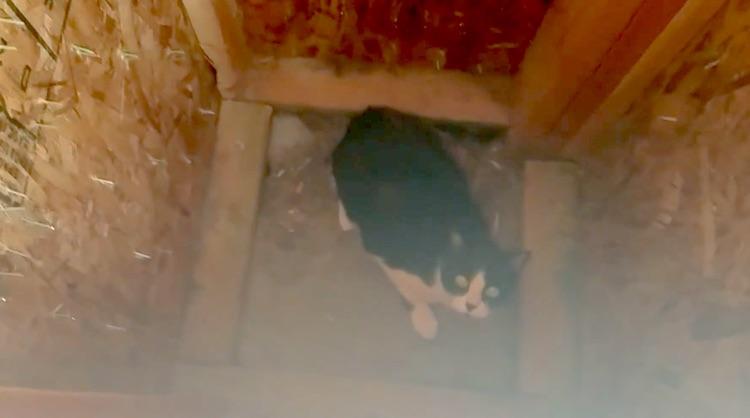 cat-stuck-in-pillar-youtube