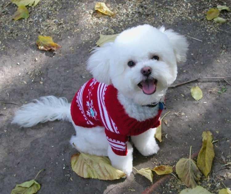 christmas-dog-cc-mbtrama