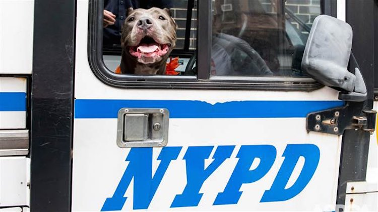 dog-in-police-car-aspca