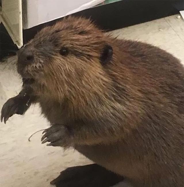 beaver-st-marys-sheriff-dpt