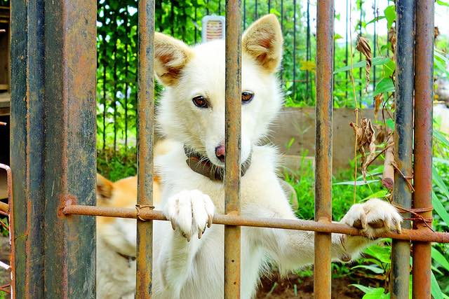 caged-dog-cc-dakiny