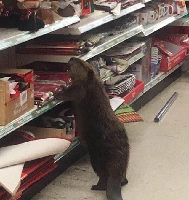dollar-store-beaver-st-marys-sheriff-dpt