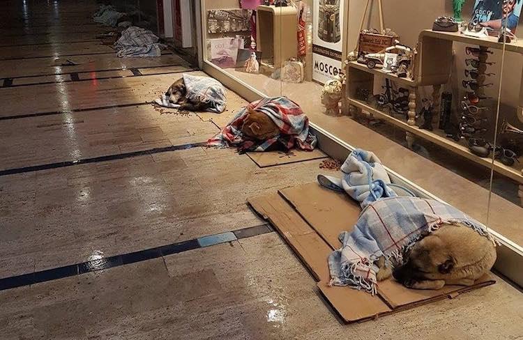 Źródło: www.goodnewsnetwork.org