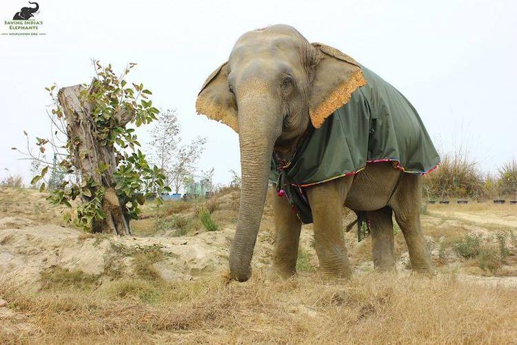 Elephant Green Sweater-Wildlife SOS