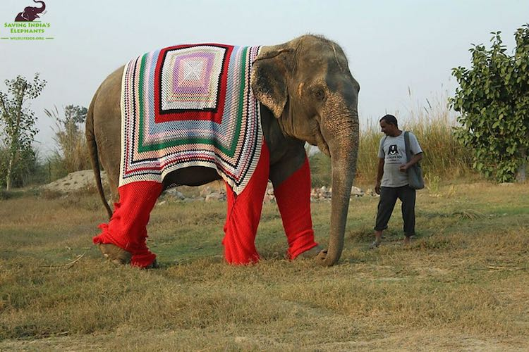 Villagers Knit Giant Sweaters For Chilly Elephant