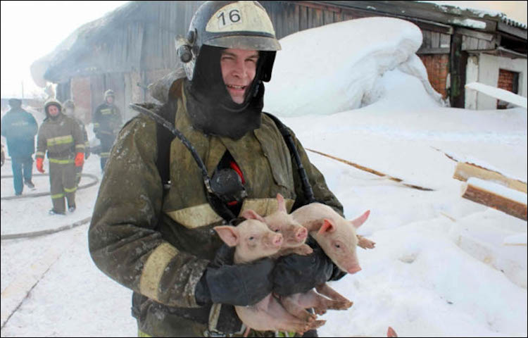 Firefighter and 3 Pigs-Emergency Ministry of Tomsk