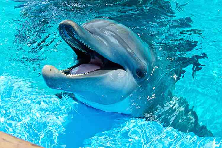happy-dolphin-cc-road-fun