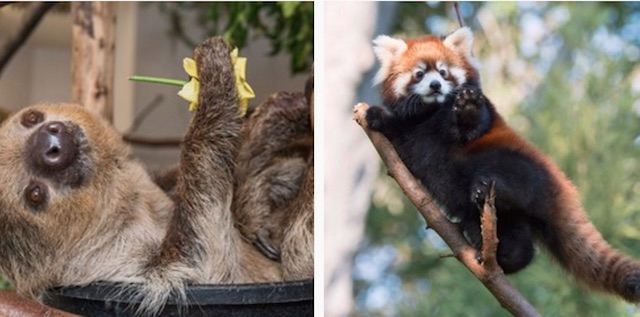 Zoos Compete To Claim Cutest Animal In Cuteanimaltweetoff