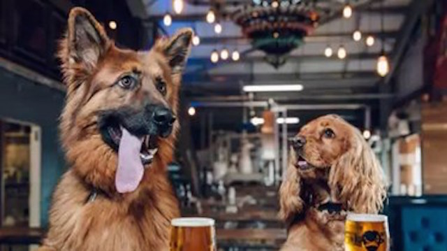 Dogs-Brew Dog