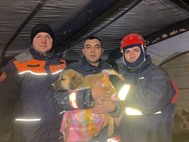 Firefighters and Puppy-Istanbul Fire Department