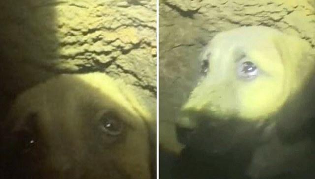 Puppy Trapped in Well-Barış Şengün