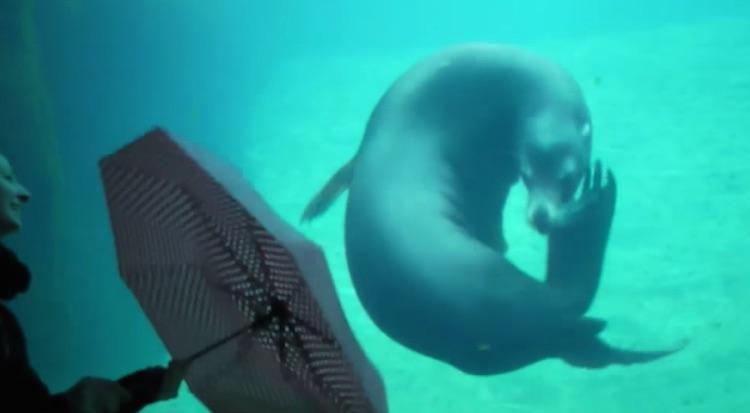Sea Lion and Umbrella-Youtube