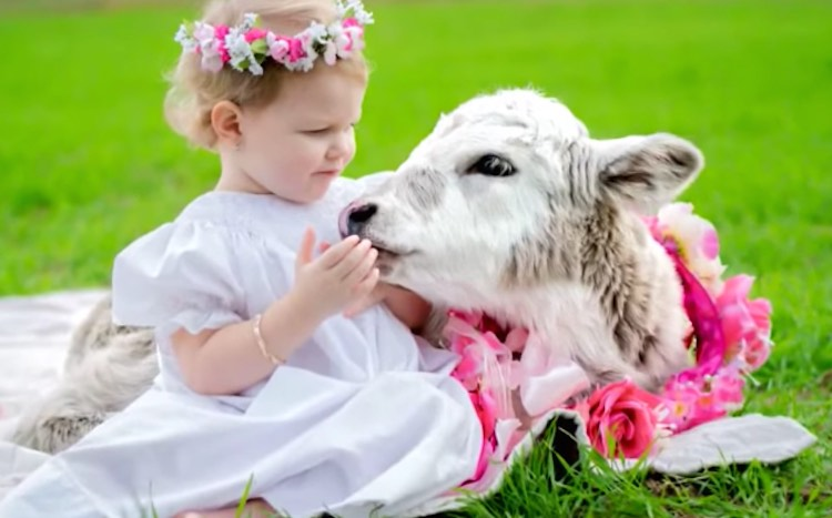 Toddler and Calf-Delta Rose Photography