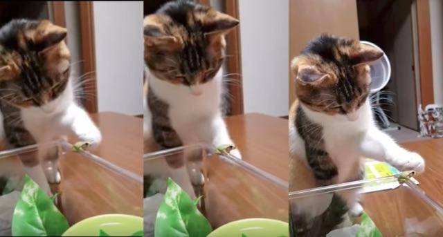 Cat Pets Frog
