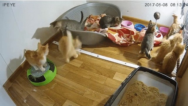 If You Donate to Feed Homeless Pets, You Can Watch Your Meal