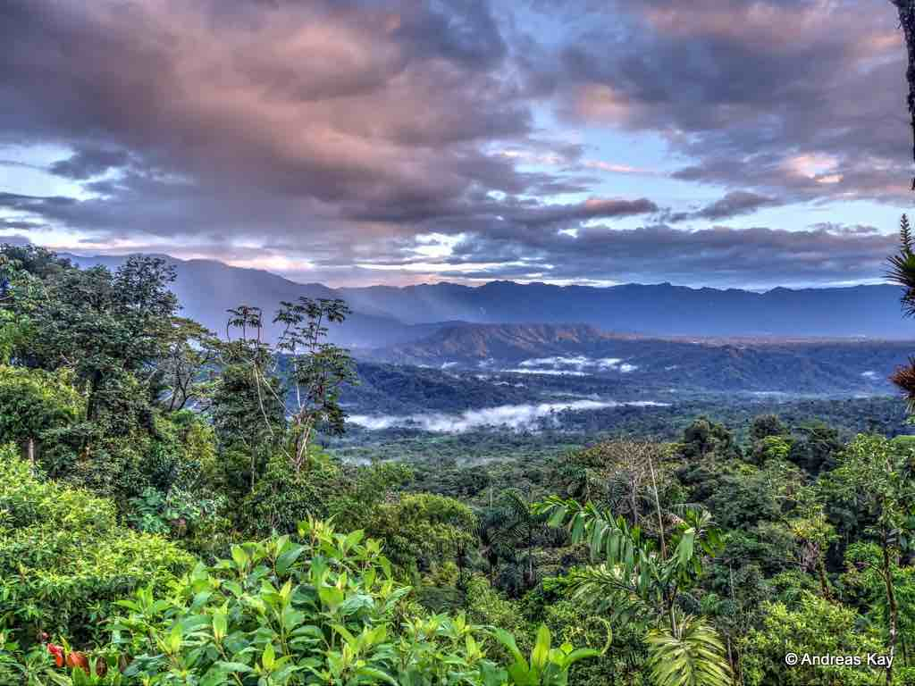 planting positive change with 73 million more trees in amazon rainforest
