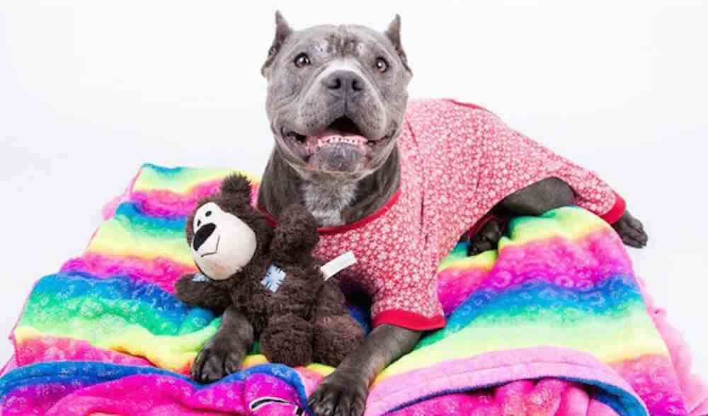 Shelter Dogs To Get Temporary Homes So They Can Celebrate