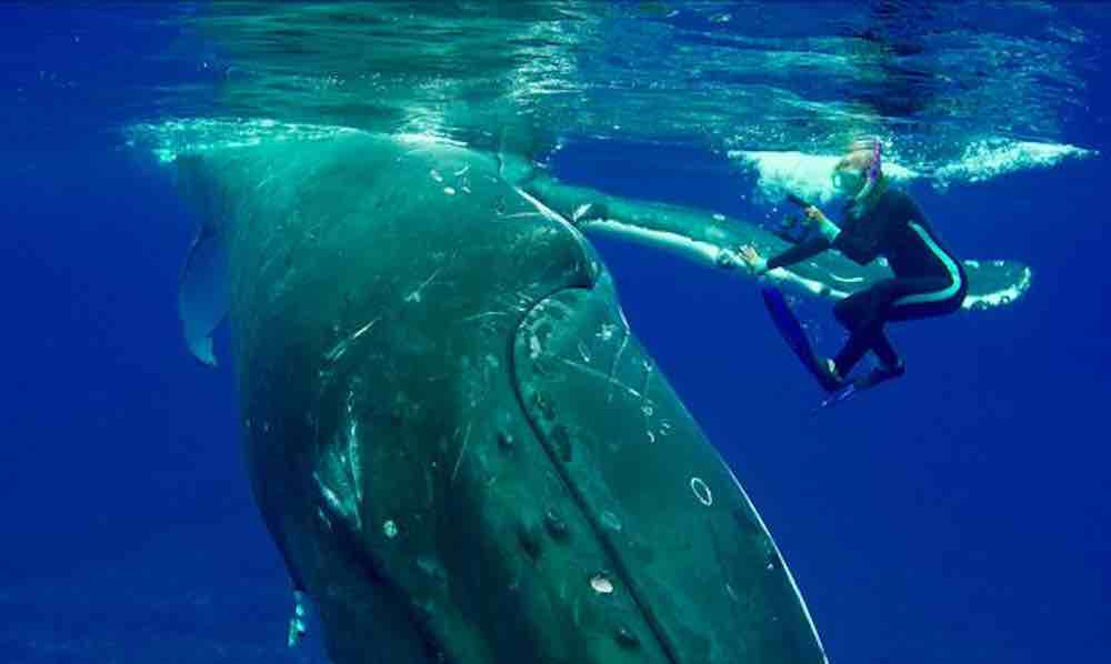 Whale saves diver from potential shark attack