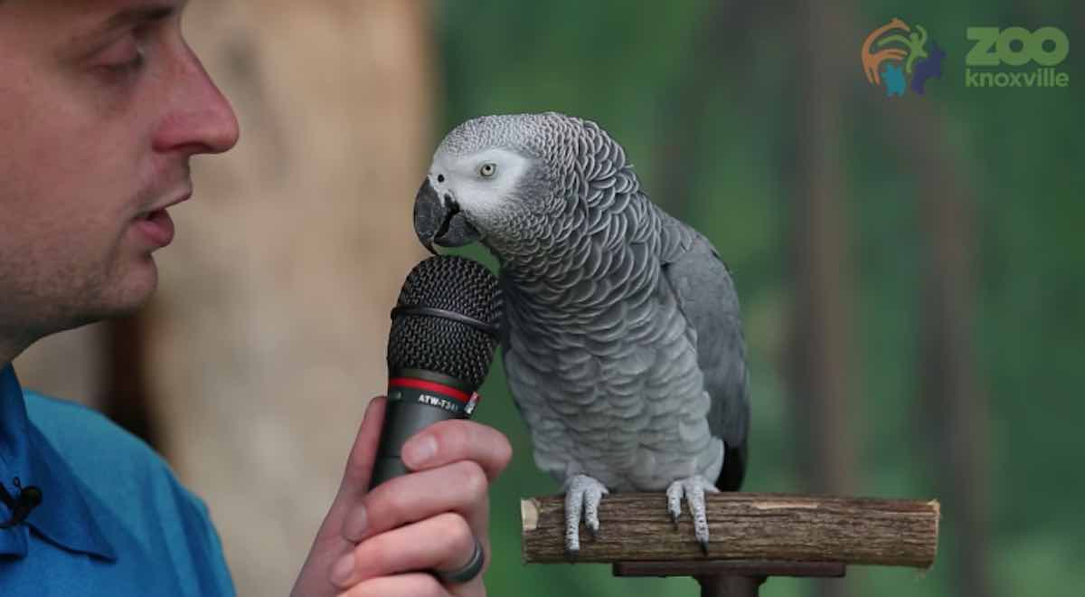 Einstein the Parrot Celebrates Her 30th Birthday By Doing a Lot of Startlingly Good Impressions