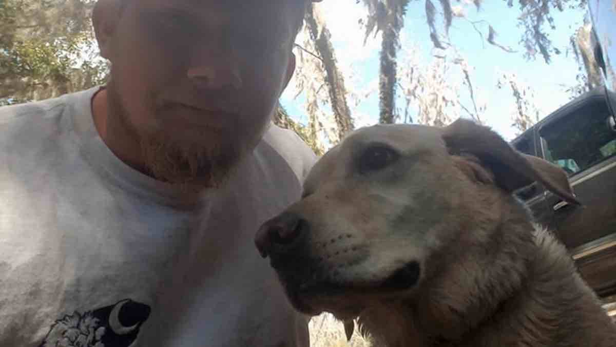 heroic neighbor dog pulls exhausted drowning man to shore