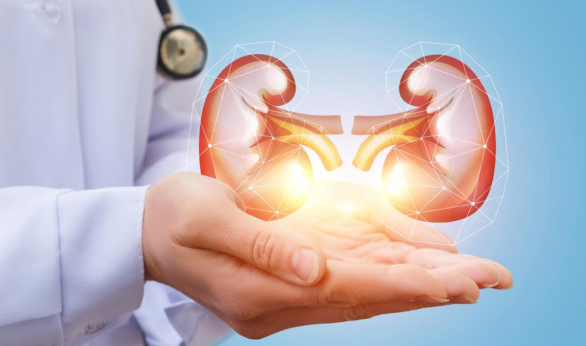 Human Trials for Artificial Kidney Could Begin This Year