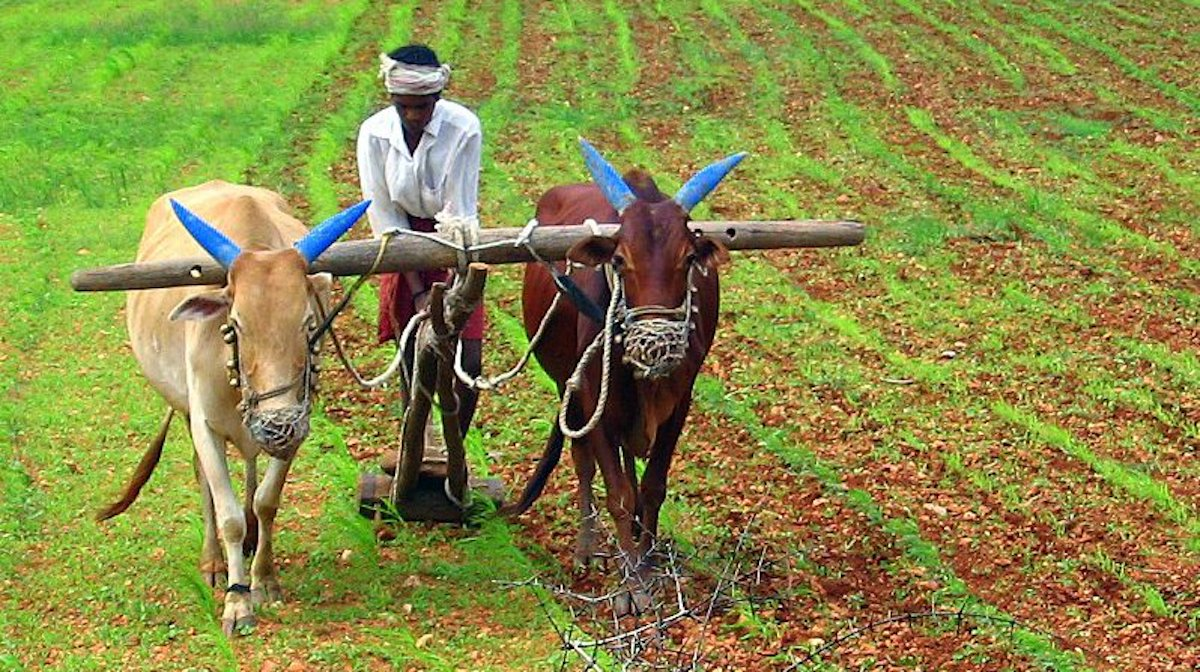 Indian Region Just Won Top UN Prize for Being World's First 100% Organic State With 66,000 Farmers
