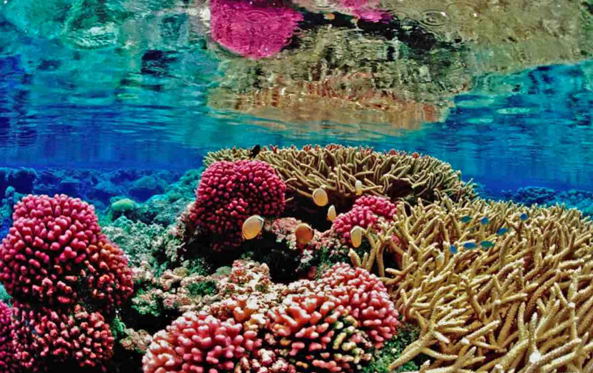 Man Postpones Retirement to Save Reefs After He Accidentally Discovers How to Make Coral Grow 40 Times Faster
