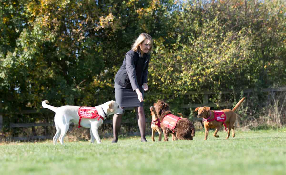 Image result for Dogs Could Be the Key to Turning the Tide Against Malaria