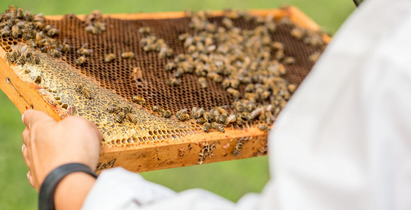 the-impressive-medicinal-value-of-the-other-bee-products-and-the-honey-too
