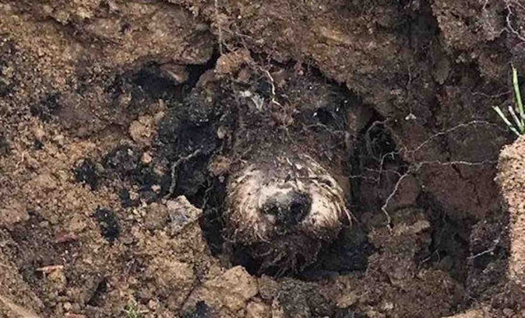 Five Days After Disappearing, Dog is Finally Found Trapped in Underground Rabbit Hole
