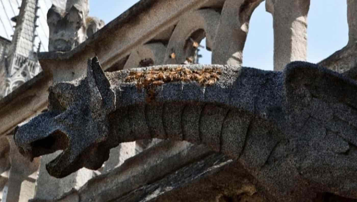 Notre Dame scaffolders broke rule on smoking before fire